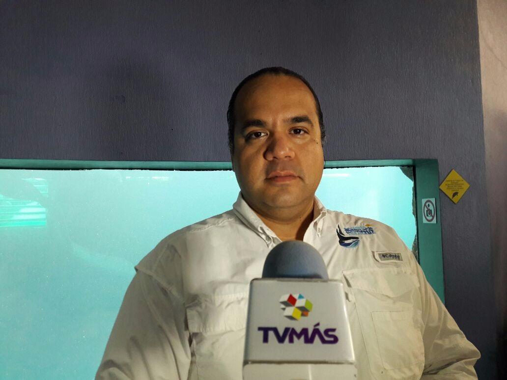 Nuevo avistamiento de manatíes en la franja costera de Veracruz-Boca del Río