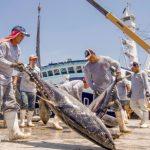 Atún mexicano llega por primera vez a Qatar
