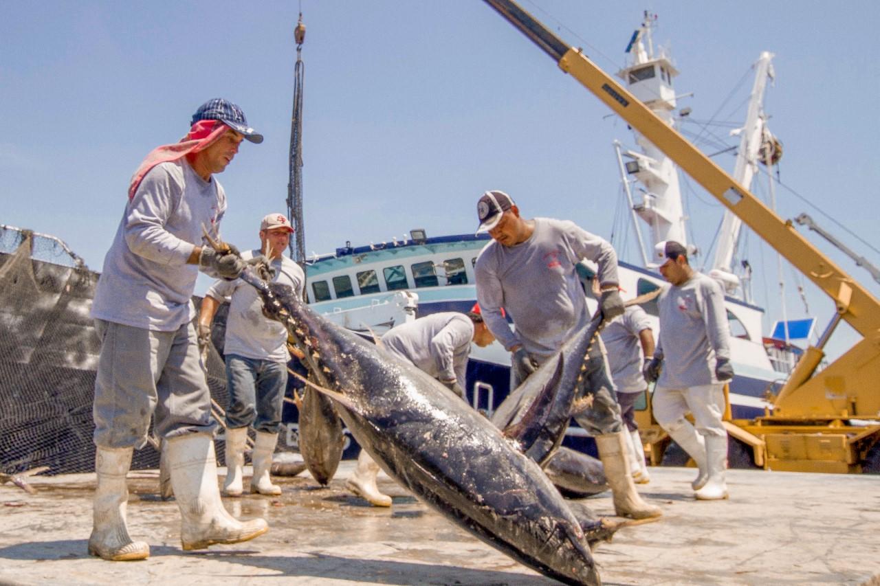 Fallo de la OMC a favor de México en el caso del atún refrenda compromiso con la sustentabilidad: Sagarpa