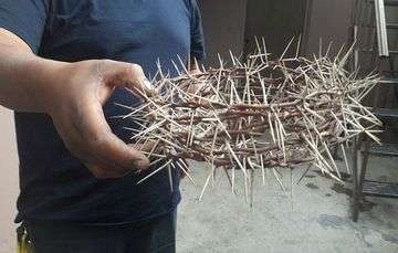 Es de huizache la corona de espinas del Cristo de Iztapalpa