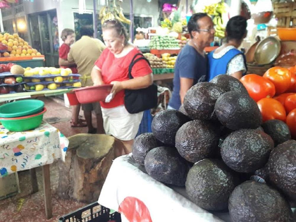 Precio del aguacate se mantiene en 85 pesos por kilo en mercados del país