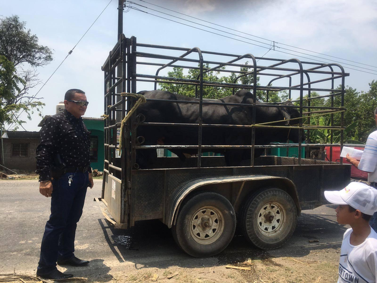 Desactiva FGE evento taurino e inhibe suelta de toros, en Amatitlán