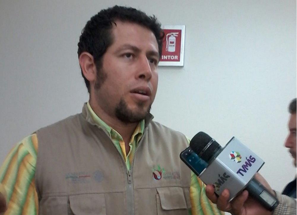 Roya del cono afecta la región de cofre de Perote, Zongolica y el Uxpanapan