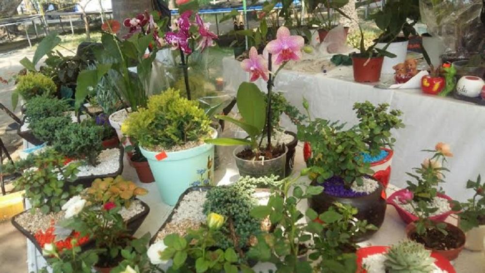 """Expo """"Flores de Mayo"""" en Parque Zamora de Veracruz"""