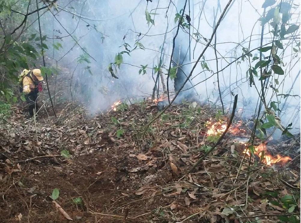 En 2017, incendios forestales han afectado más de 2 mil hectáreas en el estado