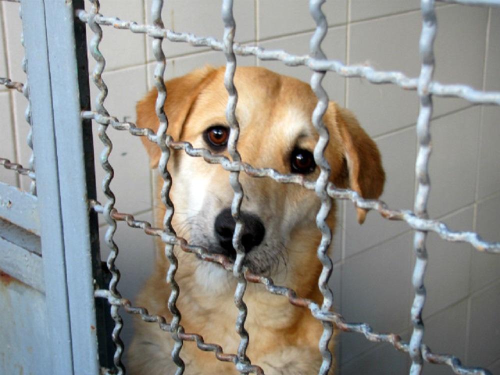 En Coatzacoalcos se han atendido casi 100% de los casos de maltrato animal