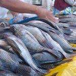 Produjo México 220.5 millones de toneladas de alimentos agropecuarios y pesqueros en 2016