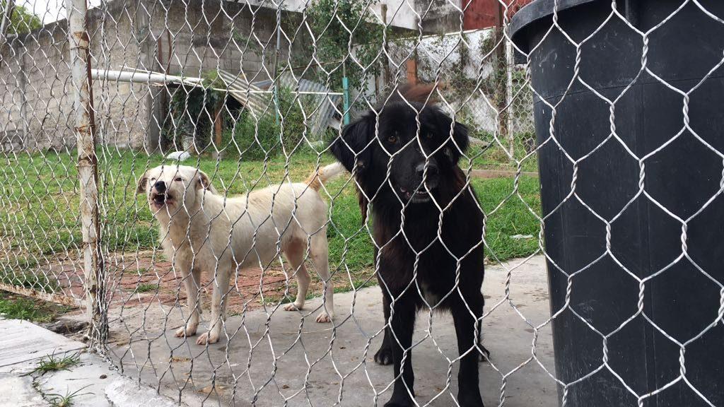 Asociación denuncia redadas y muerte de perros en Perote