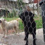 Centro de Salud Animal de Veracruz dará en adopción a perros y gatos rescatados de maltrato
