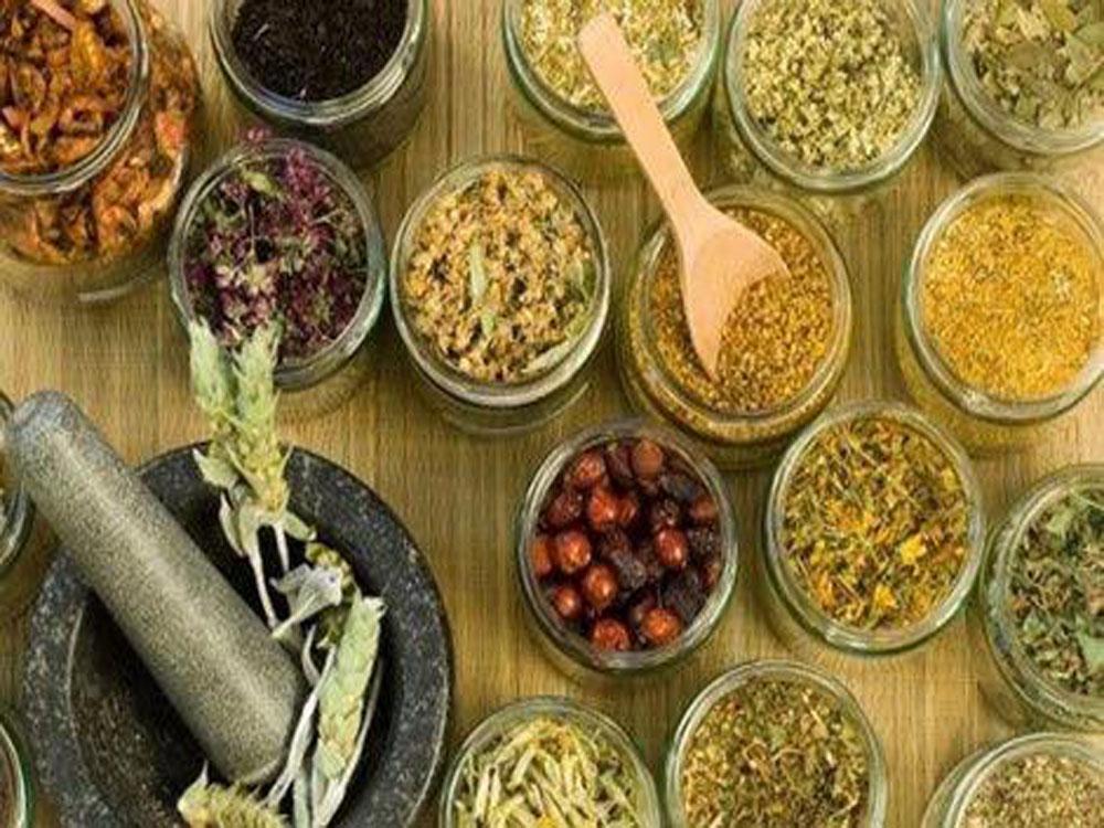 Estudiantes queretanos elaboran medicinas con herbolaria mexicana
