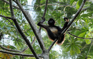 Bosques tropicales, ecosistemas con gran riqueza de especies