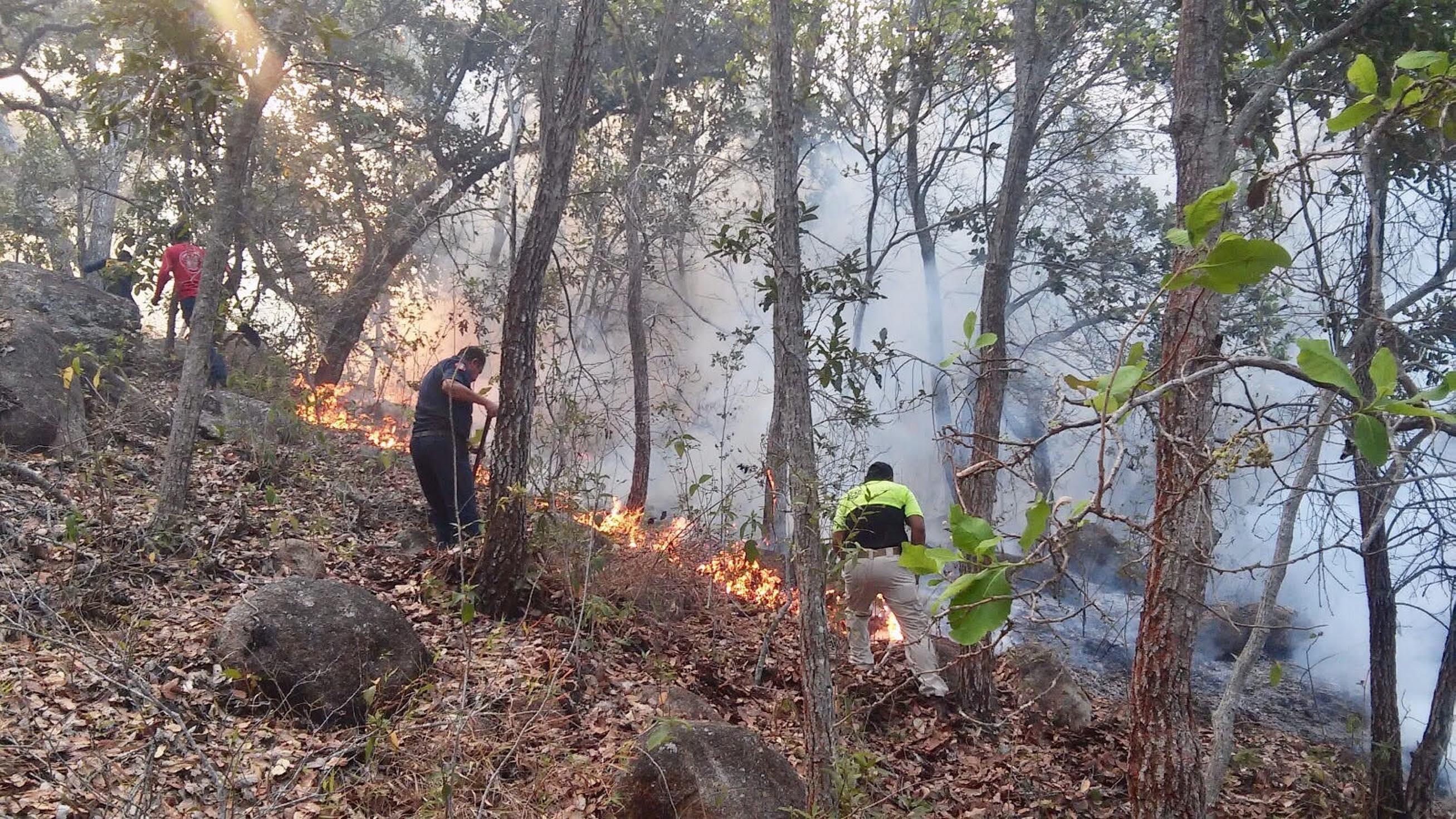 97 hectáreas afectadas por 22 incendios en Veracruz, reporta CONAFOR