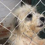 Por sobrecupo, suspenden recepción de perros y gatos en refugio de animales