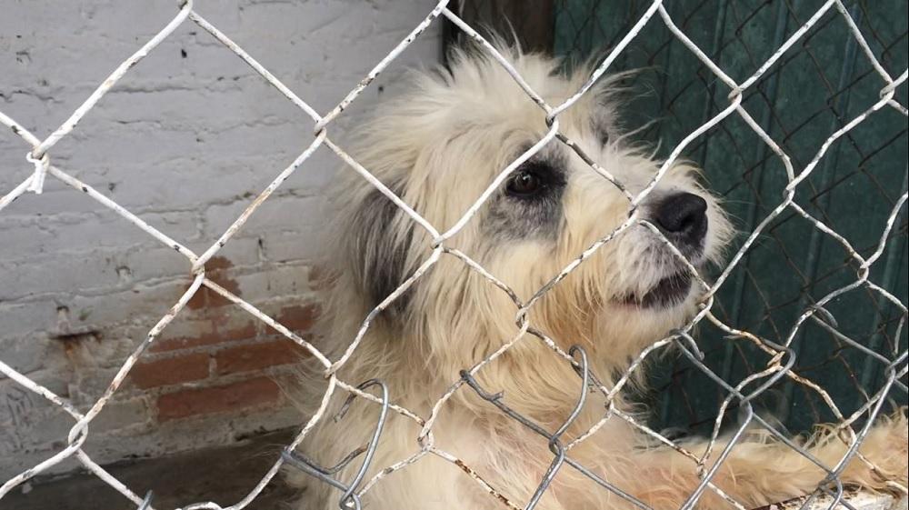 Urge sitio habilitado como albergue para perros y gatos rescatados de Coatzacoalcos
