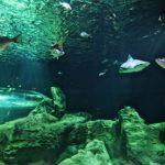 En el Acuario Michin Guadalajara nacieron dos tiburones