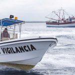 Se aplican disposiciones para proteger a la vaquita marina: Conapesca