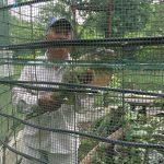 UMA de Tierra Blanca, dedicada a protección de la iguana verde