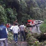Lluvias provocan caída de árbol y rocas en carretera a Teocelo; permanece bloqueada
