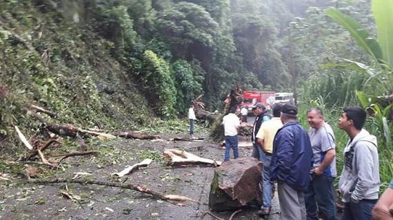 En Teocelo, lluvias benefician cultivos de café, bambú y azúcar; también provocan deslaves