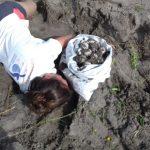 Franklin puso en peligro la vida de miles de crías de tortugas marinas