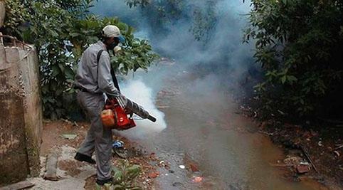 Analiza Sesver muertes para precisar su relación con el dengue