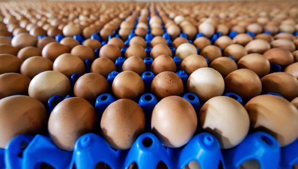 Consumo diario de huevo no eleva los niveles de colesterol: Especialista