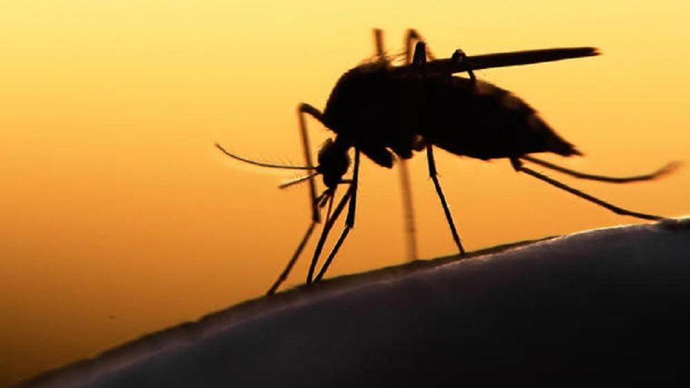 Científicos brasileños descubren bloqueador de reproducción del zika