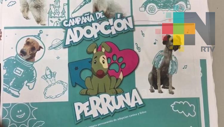 Realizarán campaña masiva de adopción de perros y gatos en Córdoba