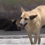 A la semana recibe hasta 30 reportes de maltrato el Centro de Bienestar Animal Córdoba