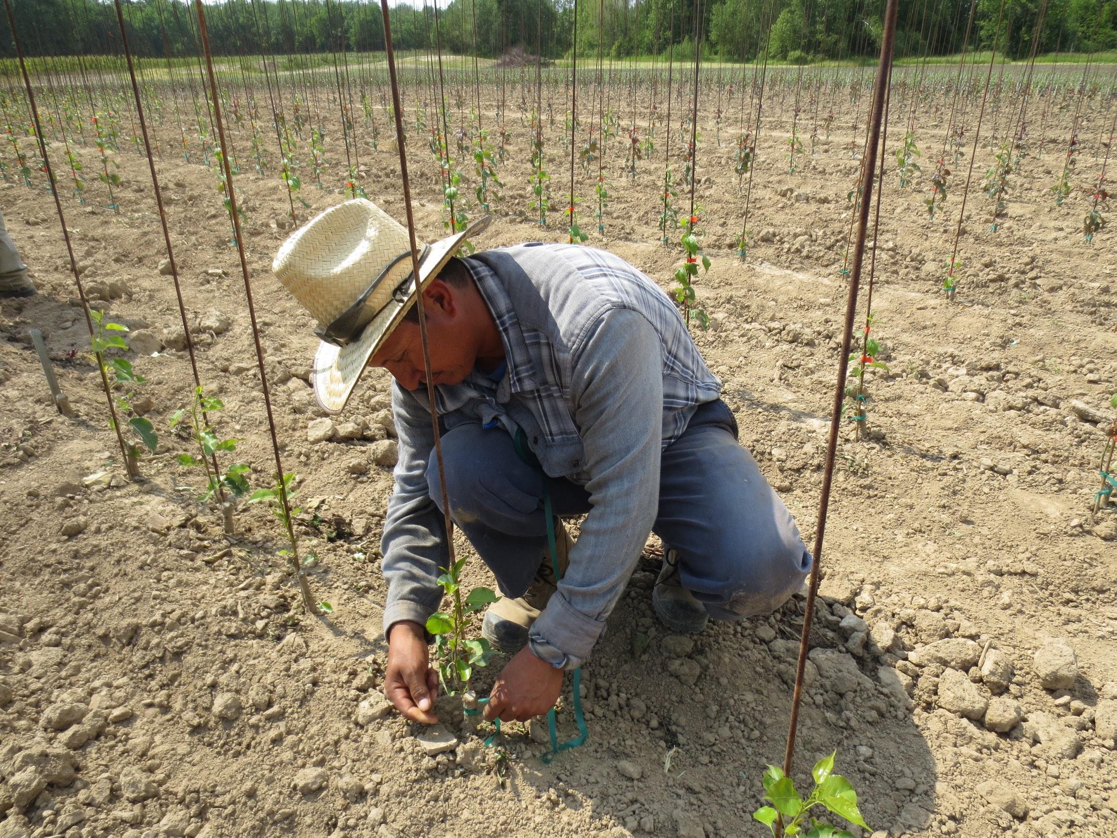 Ante disolución del TLC se debe inyectar recursos al campo: CAP Veracruz