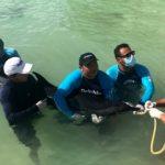 Más de mil mamíferos han varado en costas mexicanas en últimos seis años