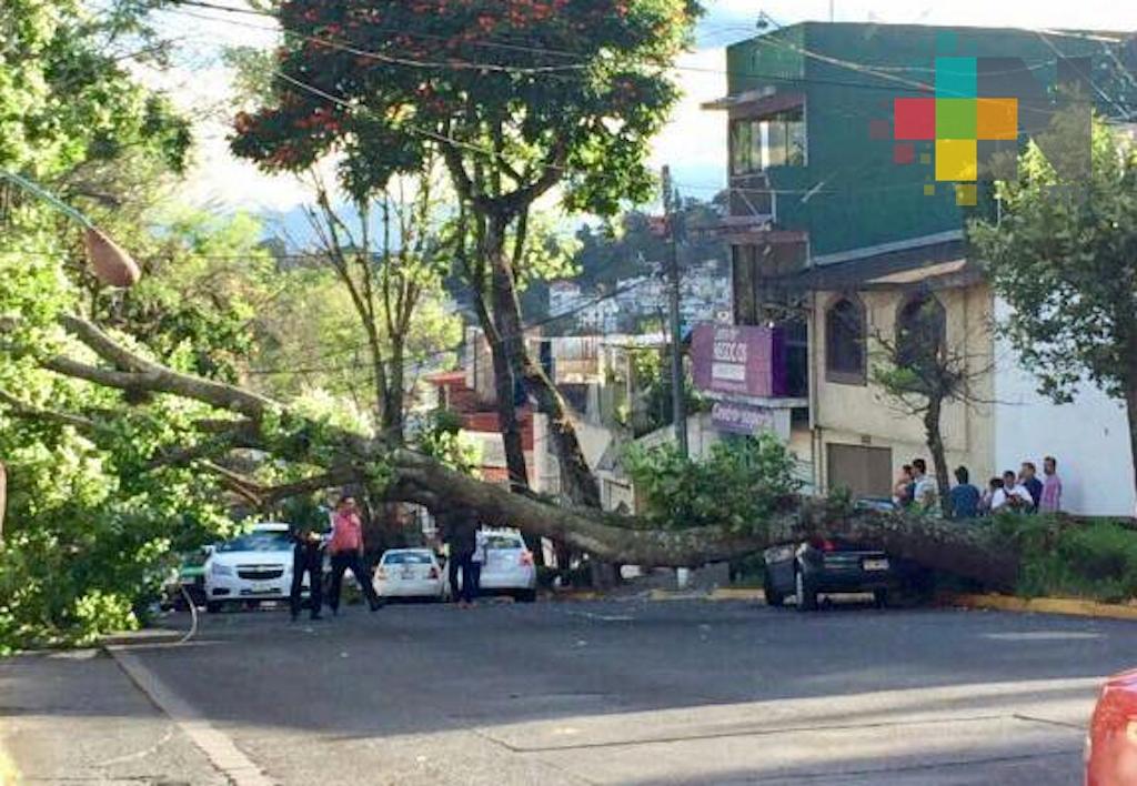 Viento tira un árbol y daña espectaculares en Xalapa