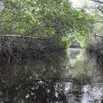 Más de tres mil hectáreas de humedales se han restaurado en Veracruz: Conafor