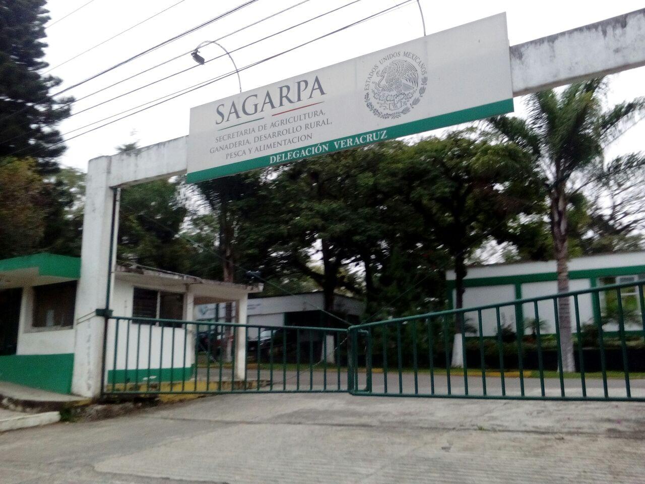 Organizaciones campesinas exigen seguimiento a denuncias contra exfuncionarios de Sagarpa