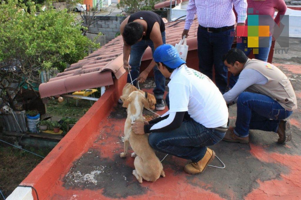Por abandono, perros se comen entre sí, en el fraccionamiento Geo Villas Los Pinos