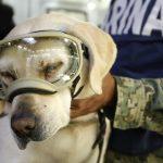 Frida, perrita rescatista se jubilaría en 2020