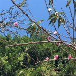 Ambiente diurno cálido y bajo potencial de lluvias en la mayor parte de Veracruz