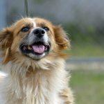 """Pasarela de adopción de perros, en el parque de """"Los Berros"""""""