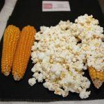 Sin TLCAN, empresa mexicana de maíz palomero regresaría a México