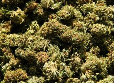 Legislador propone marihuana para animales enfermos en California