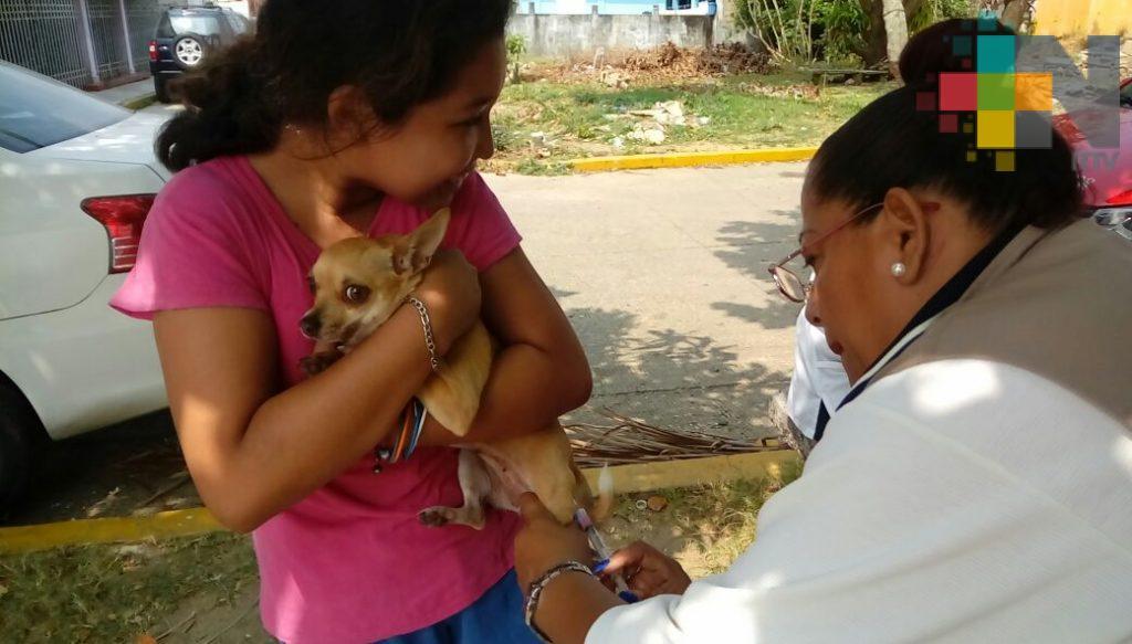 Vacunan a perros y gatos contra la rabia en la zona sur de Veracruz