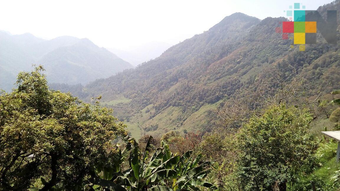 Inició programa de reforestación para la conservación 2018 en el norte de Veracruz