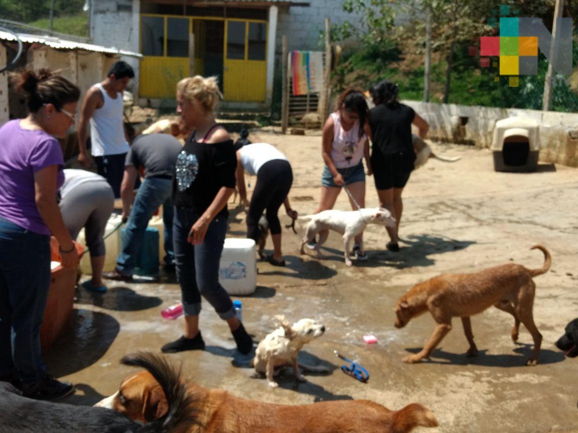 En el refugio Ada Azul de Xalapa jóvenes voluntarios bañan a 300 perros rescatados
