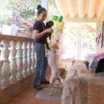 Asociación Maussi pide apoyo para perros y gatos rescatados