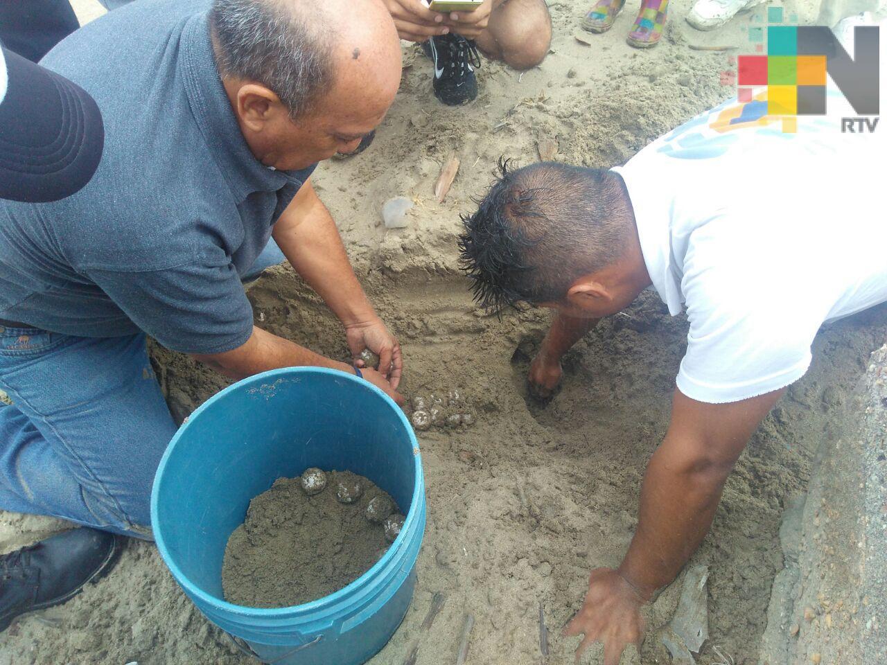 Después del paso de FF44, tortuga llega a desovar en playas de Coatzacoalcos