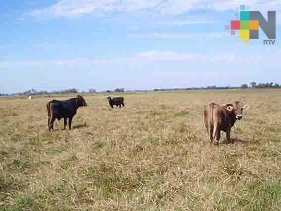 Estiaje ha empezado a afectar al ganado en el centro del estado de Veracruz