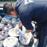 PF asegura en Oaxaca 22 mil 800 huevos de tortuga marina; un detenido