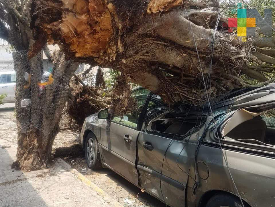 FF44 afecta a Tuxpan y Poza Rica; árboles caen sobre automóviles