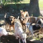 Amedea solicita apoyo para alimentar a mascotas del Centro de Control Animal, en Coatzacoalcos