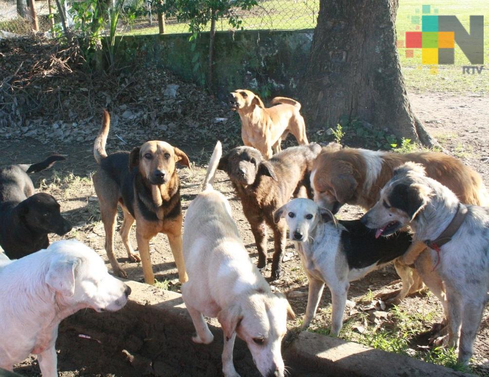 Piden habilitar sitio para confinar a mascotas muertas, en Coatzacoalcos
